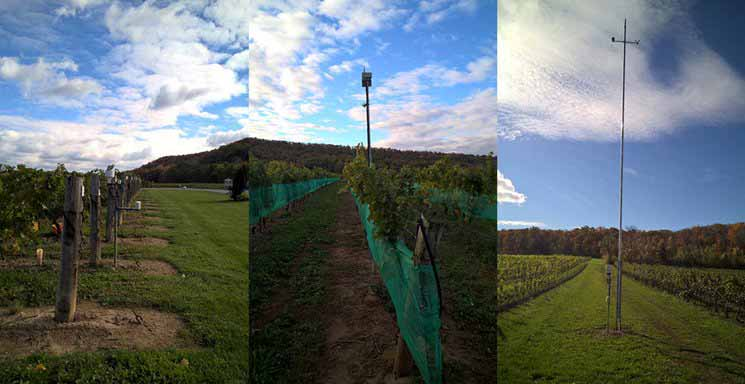 Automatic Weather Stations for Climate Services in Viticulture