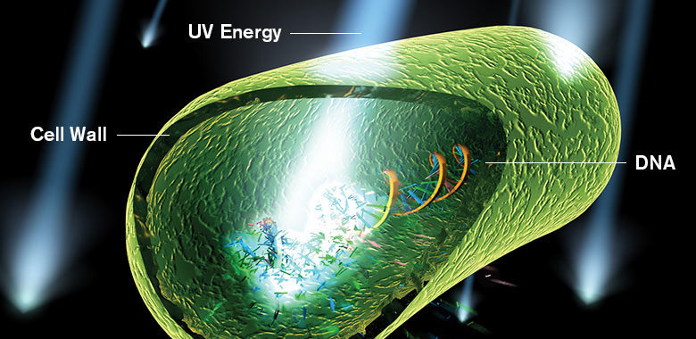 Rendering of UV energy damaging a microorganism's DNA